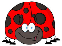 Friendly ladybug Stock Image