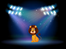 A friendly lion at the center of the stage Stock Photo