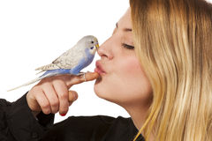 Friendly Parakeet Royalty Free Stock Photography