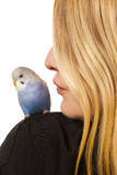 Friendly Parakeet Stock Photo