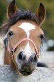 Friendly Pony Royalty Free Stock Photos