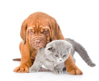friendly puppy embracing cute cat. isolated on white background Stock Photos