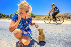 Tourist woman with Quokka Royalty Free Stock Image