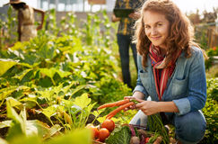 Friendly team harvesting fresh vegetables from the rooftop greenhouse garden and planning harvest season on a digital royalty free stock image