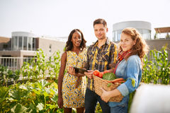 Friendly team harvesting fresh vegetables from the rooftop greenhouse garden and planning harvest season on a digital royalty free stock photo
