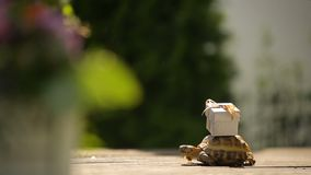 Friendly turtle brining up a present on a sunny good day stock footage