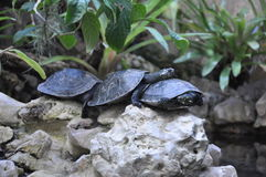 Friendly turtle family Royalty Free Stock Photography
