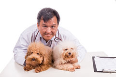Friendly vet doctor hugging two cute dogs on white background Stock Images