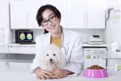 Friendly veterinarian with maltese dog Royalty Free Stock Photography
