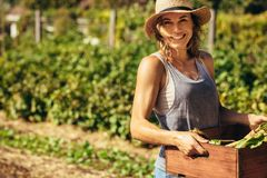 Friendly woman harvesting fresh vegetables from farm. Friendly woman harvesting fresh vegetables from her farm. Beautiful female carrying carte full fresh royalty free stock image