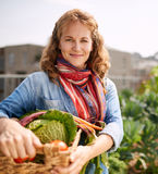 Friendly woman harvesting fresh vegetables from the rooftop greenhouse garden Royalty Free Stock Images