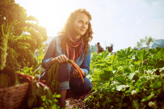 Friendly woman harvesting fresh vegetables from the rooftop greenhouse garden Stock Photography