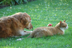Friends. A dog and a cat lay together Royalty Free Stock Photos