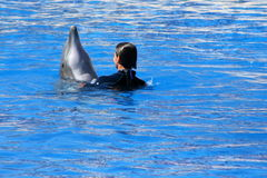 Friends. Woman playing with a dolphin Royalty Free Stock Image