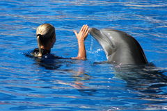 Friends. Blond woman playing with a dolphin Royalty Free Stock Photo