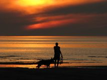 Friends at the beach. Man and his dog at the beach during sunset stock photography