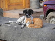 Friends cat and dog having rest. Dog hug Cat Royalty Free Stock Images
