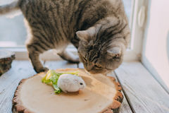 Friends cat and hamster royalty free stock photo