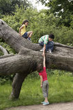 Friends Climbing On Fallen Tree Royalty Free Stock Photo