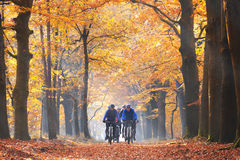 Friends cycling in the forest in autumn Royalty Free Stock Photography