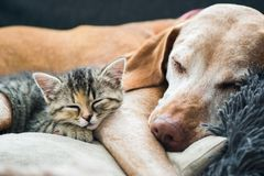 Friends. Dog and cat sleeping together as friends Royalty Free Stock Photos