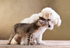Friends - dog and cat together stock photos