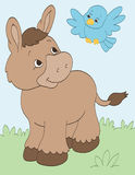 Donkey and Bird Stock Photography