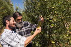 Friends examining olive oil in farm. On a sunny day Stock Images