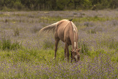 Friends feeding. Horse grazing in the meadow And bird perched on its back Stock Photography