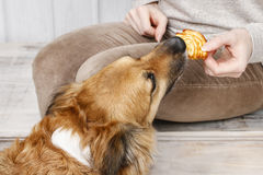 Friends forever: woman feeding his lovely dog. Animal love Royalty Free Stock Photo