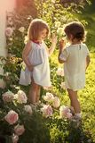 Friends and friendship. Children playing patty cake in summer garden on sunny day. Happy childhood concept. Two girls smiling at blossoming rose flowers Stock Images