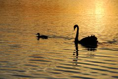 Friends on Golden Pond Royalty Free Stock Photography
