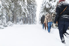 Friends Group Snow Forest Young People Walking Outdoor Stock Image