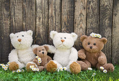 Friends or happy teddy bear family on wooden background for conc. Happy family of teddy bears on wooden background in spring or summertime Royalty Free Stock Photography