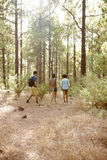 Friends hiking on a trail of pines Stock Photos
