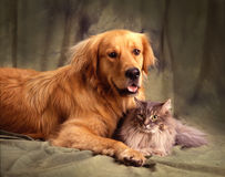 Friends for life Stock Image