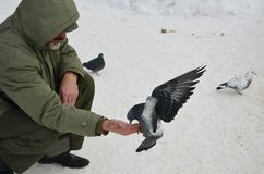 Friends. A man is feeding a pigeon from his hand Stock Photo