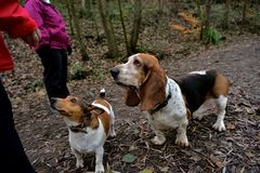Friends in the park. Two dogs hoping for a treat stock images