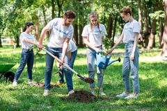 Friends planting new trees. In park stock images