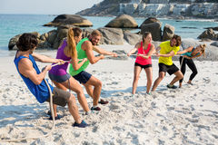 Friends playing tug of war on shore at beach Royalty Free Stock Photography