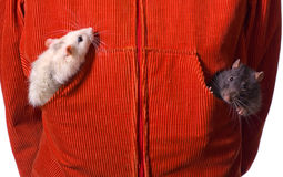 Friends in a pocket Stock Photography