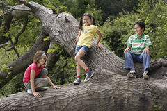 Friends Relaxing On Fallen Tree Royalty Free Stock Image
