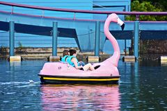 Friends relaxing on paddle flamingo boat at Seaworld Theme Park. stock photo