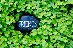 Friends - text on stone in green clover. Friends - text on stone in lush green clover stock photos