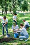 Friends volunteering and planting new trees. In park together royalty free stock image