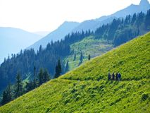 Group of friends walking in alpine meadows.  Royalty Free Stock Photography