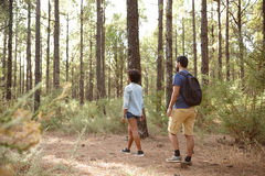 Friends walking in a pine forest. Two friends exploring a pine tree plantation in the late afternoon sunshine, looking ahead while wearing casual clothing Royalty Free Stock Images