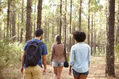 Friends walking in a pine plantation. Three friends walking in the dappled afternoon sunshine surrounded by pine trees while wearing casual clothing Stock Images