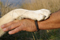 Friendship. The gesture of friendship between man and dog Stock Photos