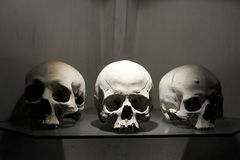 Friendship. Three white skulls displayed with dramatic lighting Stock Photography